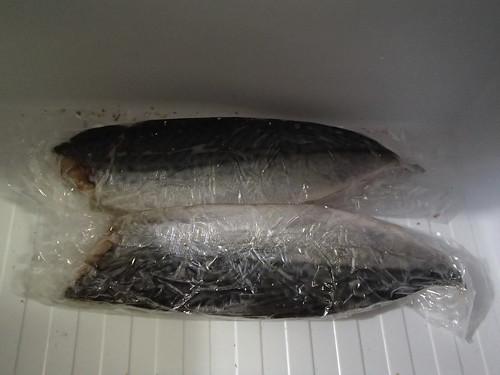 鳶 和 鯖魚 - naniyuutorimannen - 您说什么!