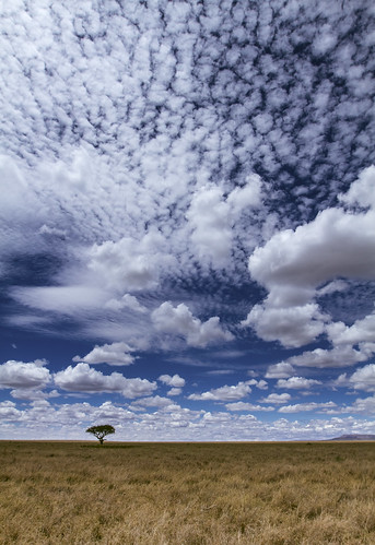 africa travel sky cloud tree tanzania wildlife savannah serengeti grassland acacia