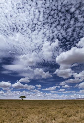 africa travel sky cloud tree tanzania wildlife savannah serengeti grassland acacia