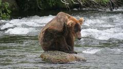 Niedźwiadek drapie się