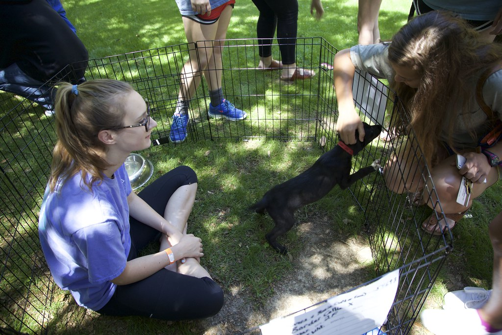 Paws for a Cause, Spring 2015