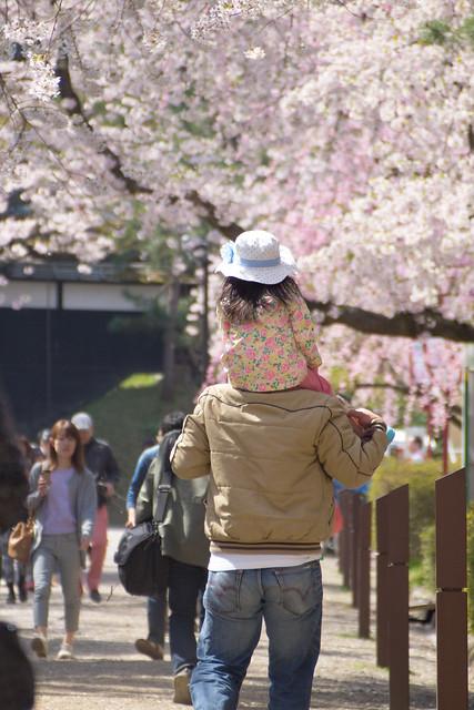 Hirosaki day 10