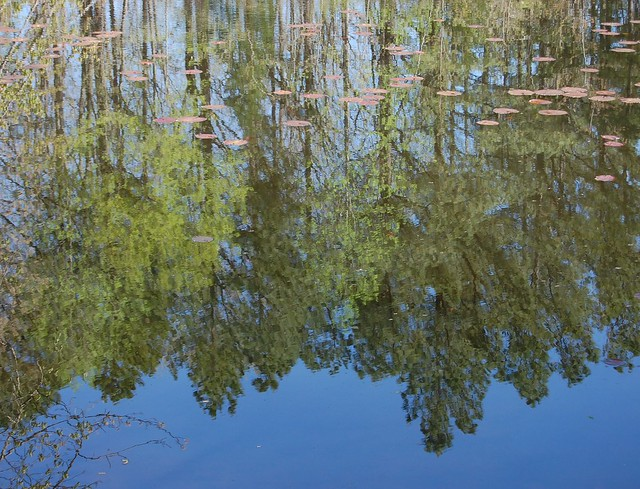 Mirror reflection on water.