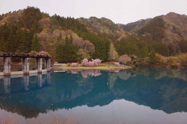 散策 [桜追いかけ] : RICOH GR
