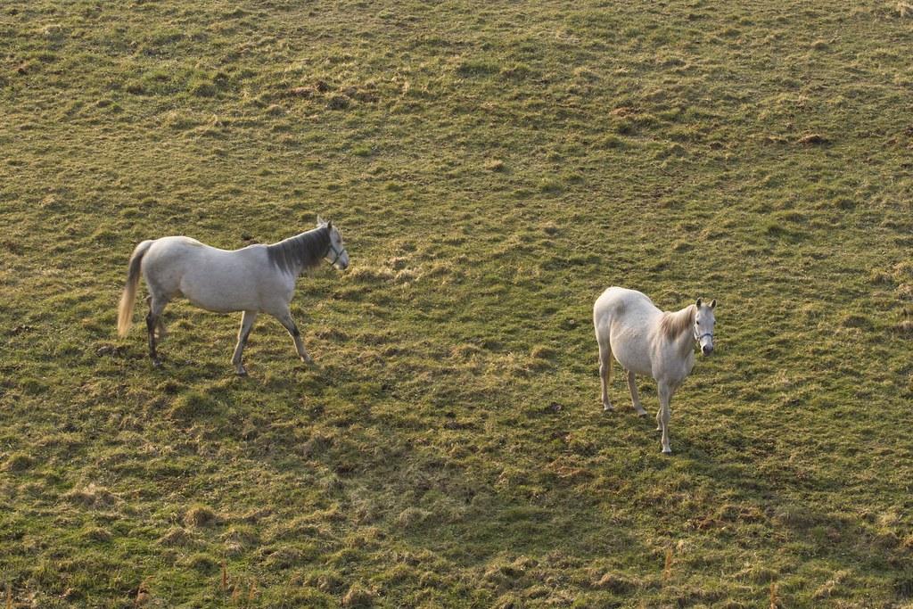 朝陽と白馬