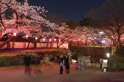 Sakura in Katsuyama park at Night