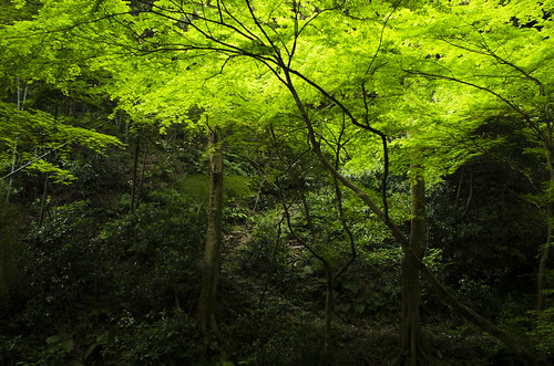 日本 神奈川県 横須賀市