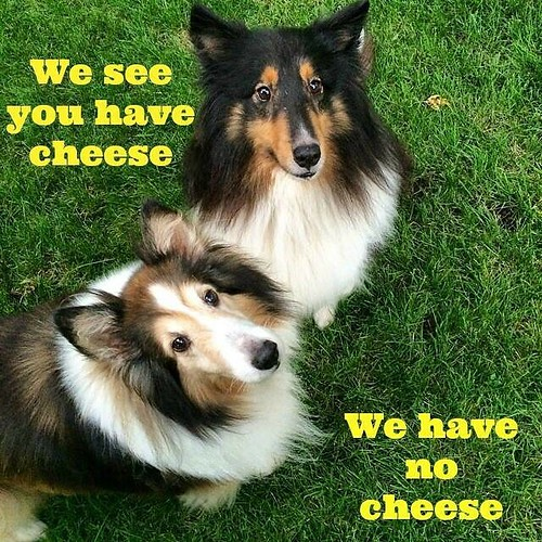 We have no cheese