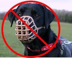 solucion para los perros agresivos