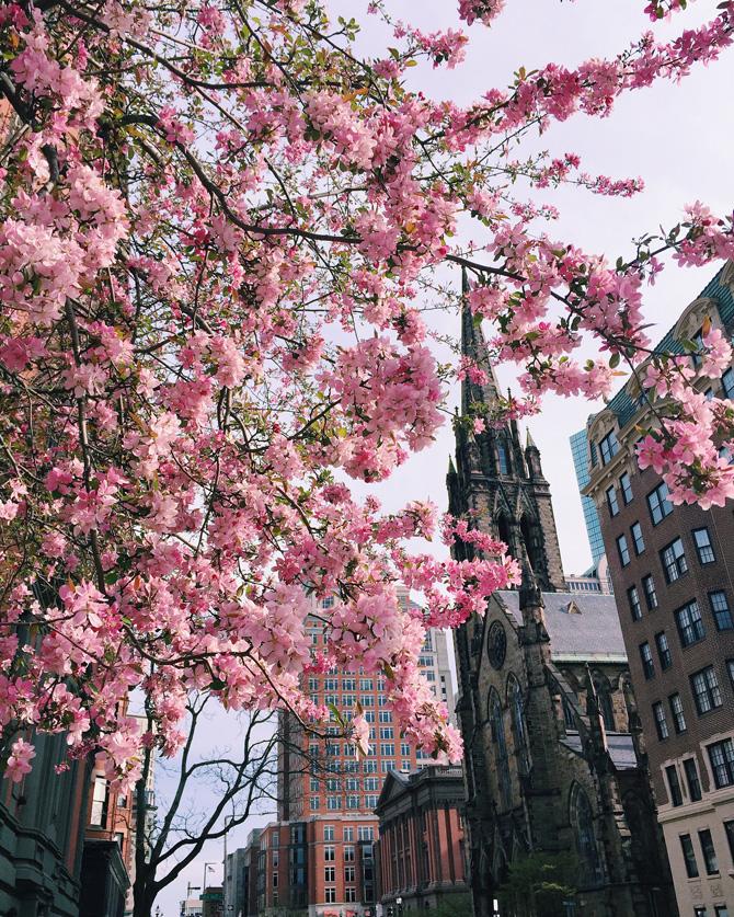 boston spring blossoms copley square