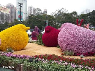 CIRCLEG 遊記 維多利亞公園 銅鑼灣 花展 2016 (29)