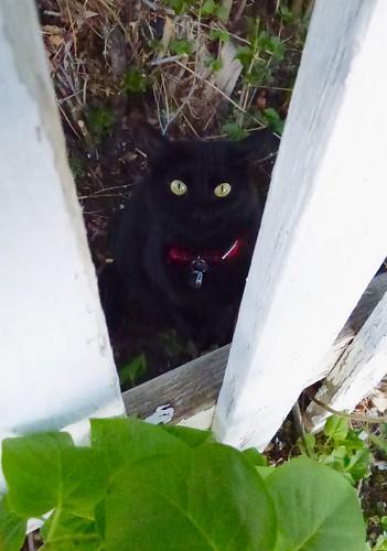 Fenced Junebug