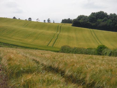 Fieldscape near Lower Eldon Cottage