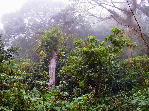 Dolores (Quezon) Philippines Picture : The jungle of the Philippines in Bankong Kahoy