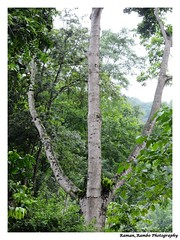 Sikkim Darjeeling Tour 2014 - Trident Tree