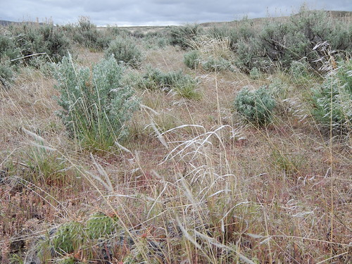 Sagebrush steppe between Worland and Thermopolis