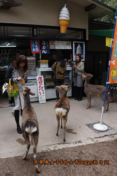 日本奈良公園東大寺14