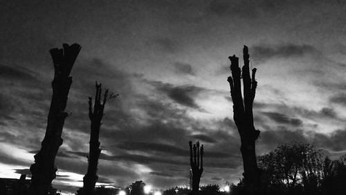 trees sky bw apple monochrome digital phonecam phone cellphone mobilephone phonecamera iphone iphone5s hnt6581