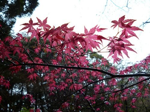 nanzen ji temple garden 3