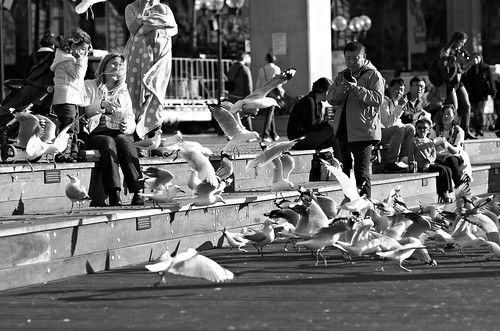 People and Seagulls