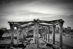 bones of a shed
