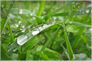 rainy Spring :)