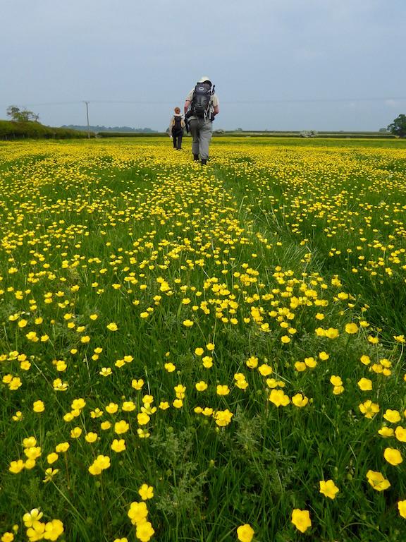 Crossing the field Thame Circular walk