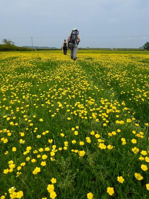 Crossing the field