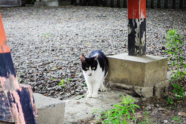 Today's Cat@2016-06-09