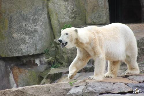 Zoo Berlin 26.04.201591