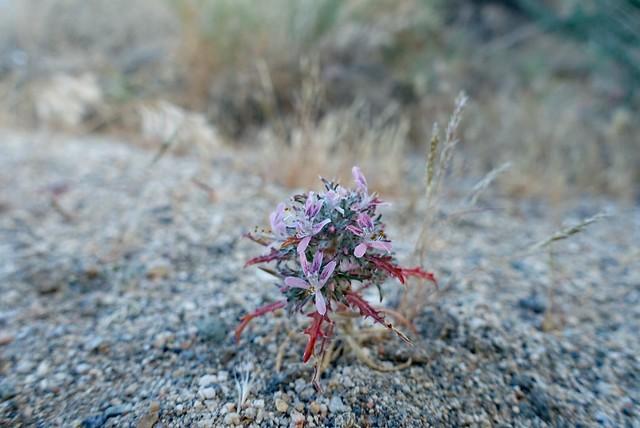 Tiny flower, m534