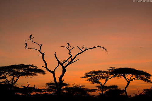 sunrise tanzania twilight wildlife safari serengeti africansafari ndutu