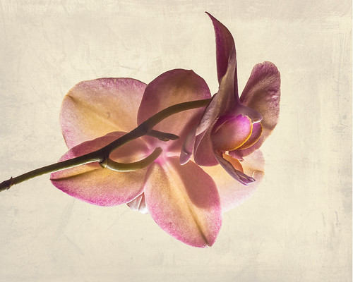 Orchid // 21 04 15