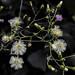 Wild Flower-0873