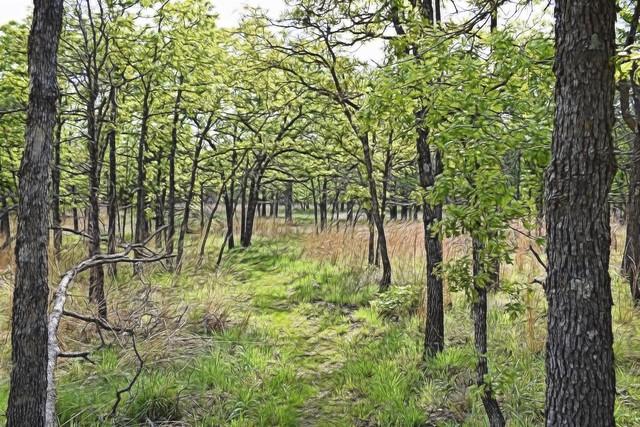 Woolaroc Woods 1
