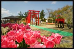 日本富山_砺波チューリップ公園.09