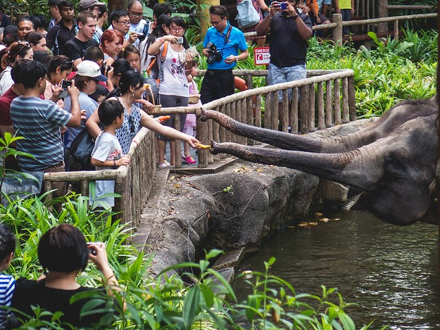 Singapore zoo via TinyBlackBird.com