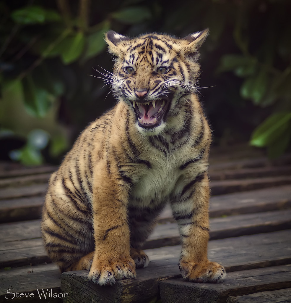 Uhanalaisia Eläimiä