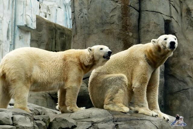Tierpark Hagenbeck 25.04.2015   134