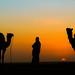 Thar desert silhouette by bragato.nicola