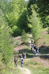 Marche à Gambaiseuil - Photo of Houdan