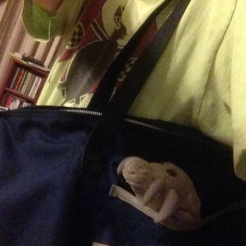 Dust Mite Selfie