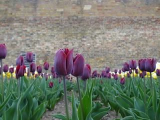 Image of Wrest Park & Gardens. april tuin lente 2016 eastofengland wrestpark silsoe 1001gardens bbedfordshire 1001tuinen
