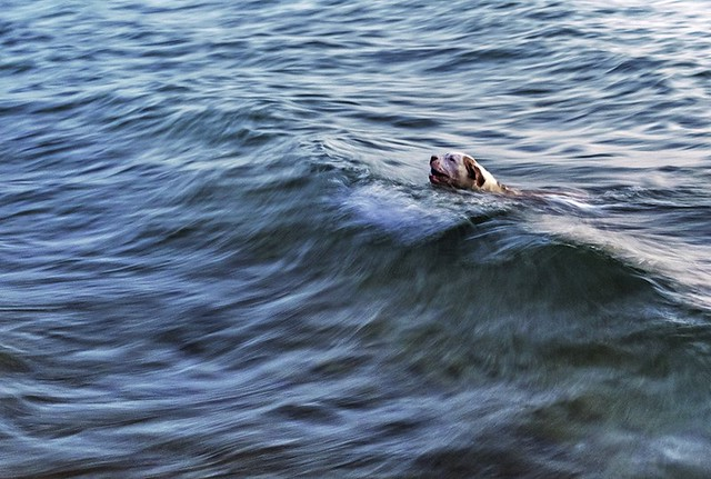 the dog  in the waves (slow shutter speed)