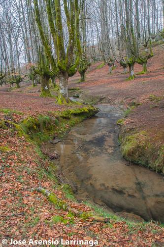 Hayedo de Otzarreta Parque Natural de Gorbeia 2015 #DePaseoConLarri #Flickr -057