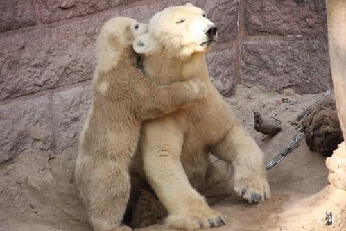 Zoo Rostock 11.04.2015107