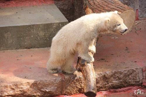 Zoo Rostock 11.04.201568