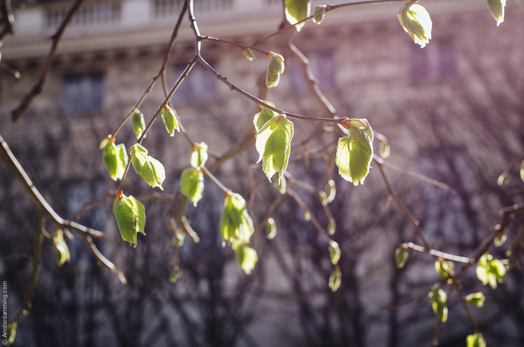 Paris, Spring at Palais Royal