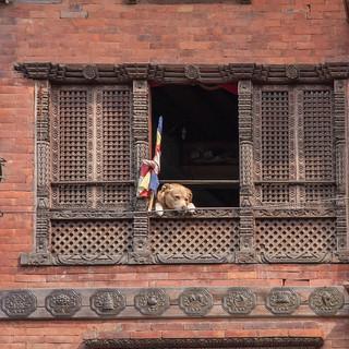 Image of Swayambhunath near Kathmandu. chien maison fenêtres mg4758
