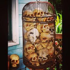 window, wood, cage,
